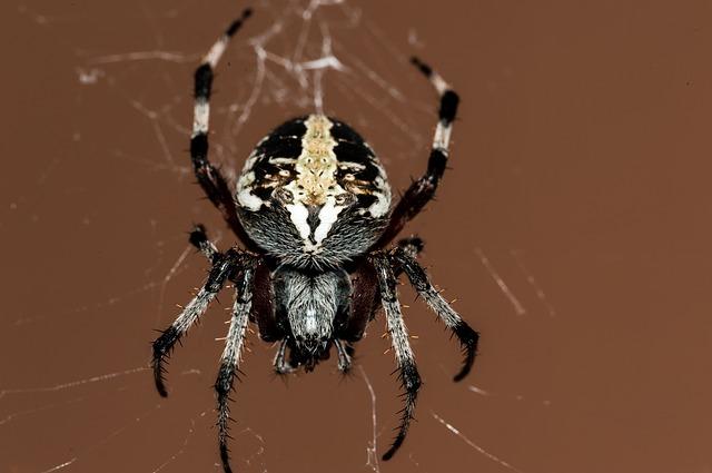 lutte contre les araignées