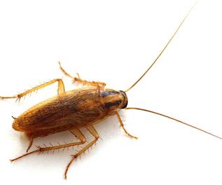 blattes comment prévenir